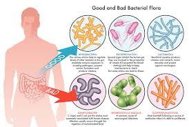Good And Bad Bacteria In Our Gut