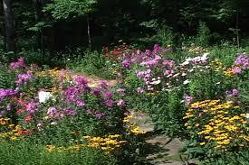Wildflower Garden Design At Home Interior Designing Magnificent Wildflower Garden Design Gallery