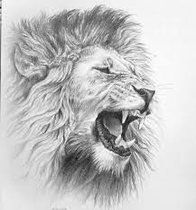 realistic lion face drawing. Modren Drawing Black Bear Drawings In Pencil  Lion Pencil Drawing On Coquille Paper  Early 90u0027s This  Art Pinterest Lion Tattoo Tattoos And To Realistic Face Drawing O