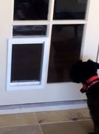 step 2 install a dog door in the glass french door