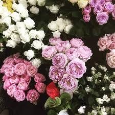 Wallpaper Bunga Mawar Merah Dan Putih Bunga Mawar Buat