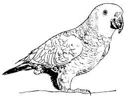 Coloriage A Dessiner Animaux Perroquet L Duilawyerlosangeles