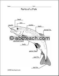 animal diagram  fish  labeled and unlabeled    abcteachanimal diagram  fish  labeled and unlabeled    preview