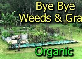 how to get rid of weeds in garden. Kill Weeds Vegetable Garden Preventing Getting Rid Of Grasses In Beds Best Way . How To Get