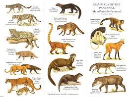 Mammals Of The Pantanal Chart Pantanal Brasil Brazil