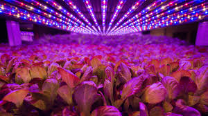 Apache Tech Grow Lights The Open Source Movement To Hack Your Arugula Grist