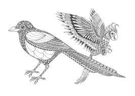 大人の塗り絵鳥無料印刷 もくもくん知育プリントキッズ