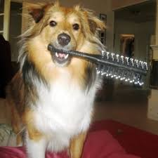 """Résultat de recherche d'images pour """"brossage du chien sur table de toilettage"""""""