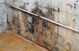 black mold on basement concrete walls