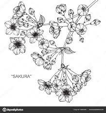 桜の花 図面と黒と白の線画でスケッチ ストックベクター Suwi19