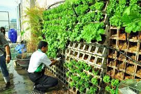urban garden for kasetsart university