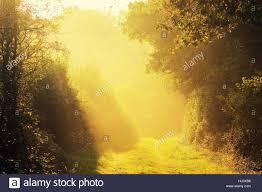 Yellow Light Shining Down Sun Rays Shining Down On Woodlands Stock Photo 131622938