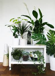 decoration at home; 25 Unexpected Ways To Decorate With Plants Brit Co