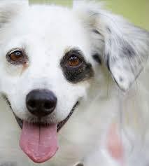 Dog Breed Compatibility Chart List Of Dog Breeds Petfinder