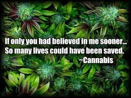 marijuana research studies nyc