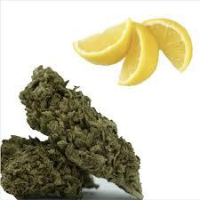 bento sunnyvale cupertino 80 28 grams oregon lemon