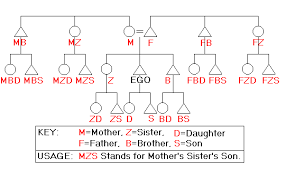 Anthropology Chart A Great Diagram Of The Alphabetical Relationship Codes Used