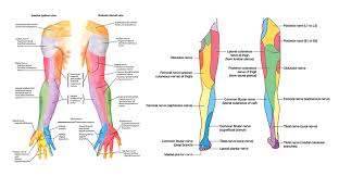 Spinal Dermatomes Chart Dermatomes What Are They Dr Michael A Castillo Md