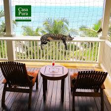Casa Pura Katzennetz Für Balkon Ohne Bohren Mit Befestigungsseil