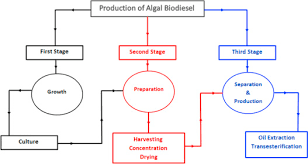 Biodiesel Production Chart Biodiesel Production From Microalgae Processes