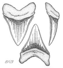 Small Picture Drawn shark megalodon Pencil and in color drawn shark megalodon