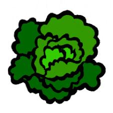 lettuce clipart.  Lettuce To Lettuce Clipart