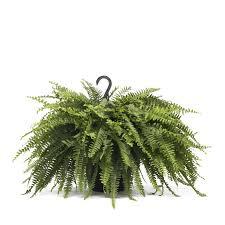 interior fake hanging ferns baskets boston artificial flower