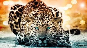 Image result for animal pictures
