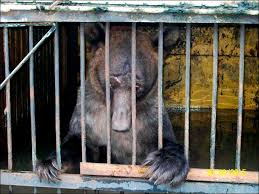 zoo animals in cages. Modren Animals Flooded Zoo In Ussuriysk On Zoo Animals In Cages S