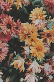 hipster flower wallpaper tumblr. Exellent Tumblr Photography Pretty Cute Adorable Tumblr Photo Perfect Hippie Hipster  Vintage Classic Boho Indie Aw Grunge Pop And Hipster Flower Wallpaper Tumblr L