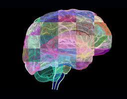 Sternberg Intelligence Understanding The Triarchic Theory Of Intelligence