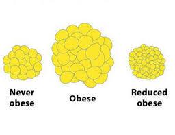 Abnehmen fettzellen