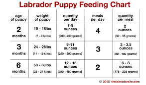 Puppy Feeding Schedule Chart Learn About All The Options Available For Feeding Your Lab