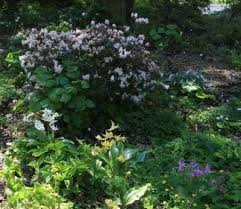 Small Picture Woodland Garden Design How To Plant A Woodland Garden