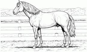 Small Picture Awesome Horse Pictures For Coloring Ideas New Printable Coloring