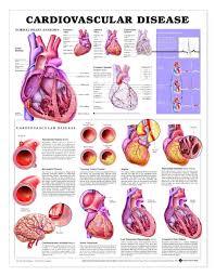 Cardiovascular Disease Laminated Anatomical Chart 3rd Edition
