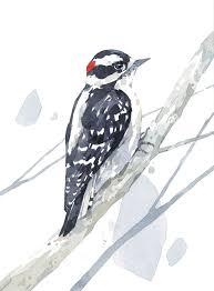 bird watercolor art prints david scheirer watercolors simple watercolor flowers downy wood art print