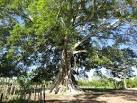 imagem de Pedro Velho Rio Grande do Norte n-12