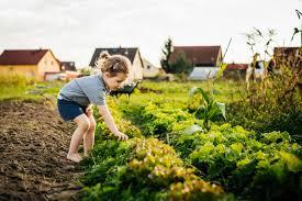 Vegetable Garden Fertilizer Chart How Often Should You Fertilize A Vegetable Garden Home