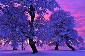 Winter nature backgrounds Pink Light Purple Wallpapers Color Night Sun Last Trees Light Purple Sky Winter Nature Desktop Backgrounds For Amazoncom Light Purple Wallpapers Color Night Sun Last Trees Light Purple Sky