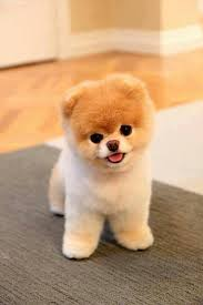 cute baby dog. Fine Cute I Donu0027t Have The Schedule To Accommodate A Dog But If Ever Do Want  This One And Cute Baby Dog R