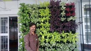 Small Picture Best Plants For Balcony Garden In India Best Balcony Design