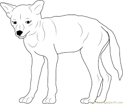 Small Picture Baby Coyote Coloring Page Free Coyote Coloring Pages