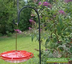 hummingbird garden. Contemporary Garden Hummingbird Feeder Nestled In A Butterfly Bush  The Hummers Love It Inside Garden T