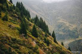 outdoor desktop backgrounds. Mountains, Mountain Pass, Landscape, Nature, Pine Trees, Romania, Outdoors HD Outdoor Desktop Backgrounds