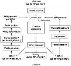Protein Synthesis Flow Chart Key 27 Proper Flow Chart Of Cheese