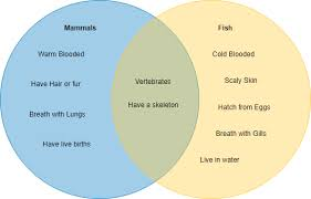 What Is A Venn Diagram How To Create Venn Diagram Online Ralph Garcia Medium