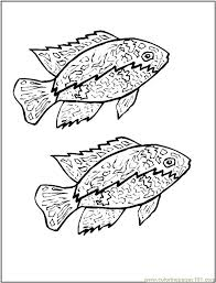 Small Picture Cichlid Coloring Page Free Other Fish Coloring Pages