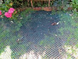 dog grass mesh conclusion