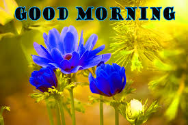Good Morning Flowers Photo Wallpaper Pictures Free Flower